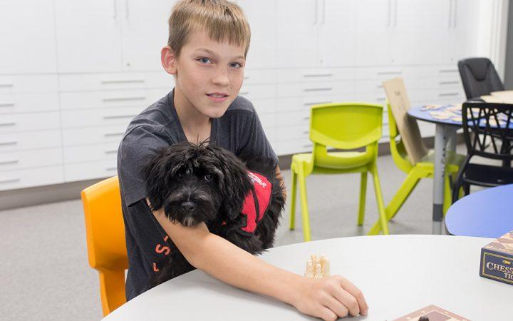 New therapy dog Maverick at Carinity Education Rockhampton