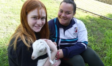 Carinity Education Southside students assist at an animal shelter.